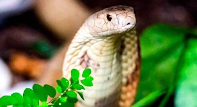 Cobra naja picou estudante de veterinária