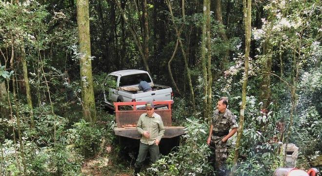 Derrubada ilegal de 17 árvores raras rendeu multa de R$ 12.750 Mapeamento de árvores gigantes