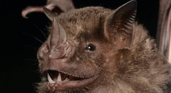 Vírus foi encontrado em morcegos congelados em laboratório para estudo