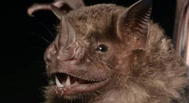 Pedra Branca, no Rio de Janeiro, tem 29 espécies de morcegos