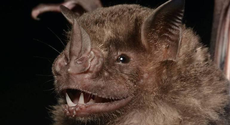 Pesquisa sinaliza como ponto de partida os morcegos
