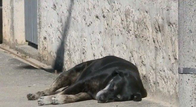 Por lei, a eutanásia de animais com doenças que podem ser tratadas é crime