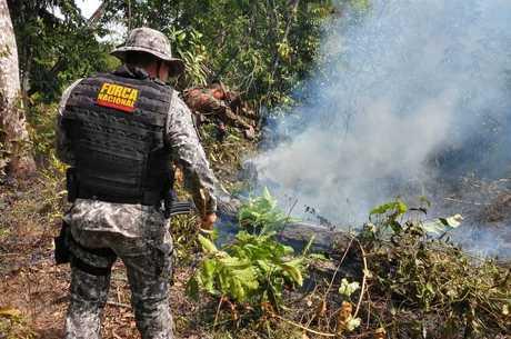 Força Nacional foi à floresta tentar reduzir destruição