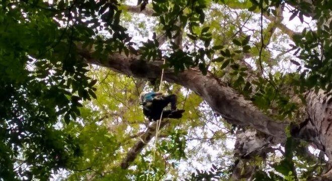'Crescer em altura é um desafio para as árvores', diz o professor que coordenou expedição