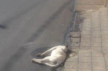 Cerca de 17 cães já morreram envenenados