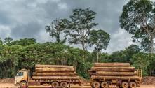 Amazônia perde o equivalente a 3 cidades de São Pauloem madeira