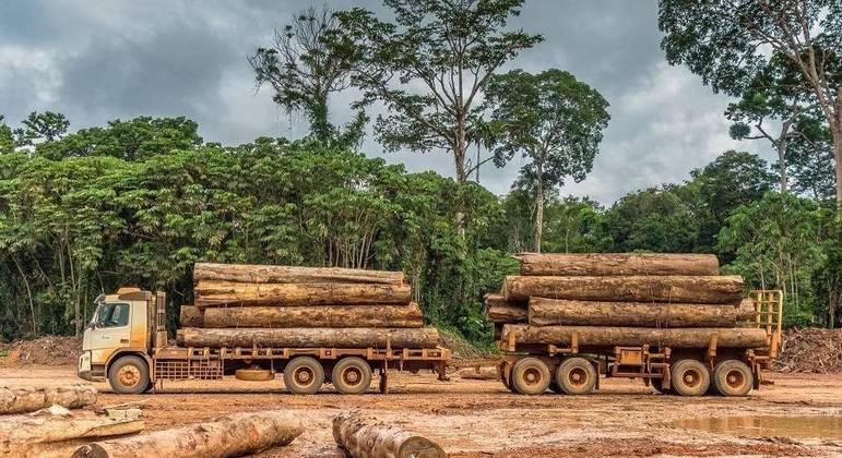 Extração de madeira amazônica atinge área equivalente a três cidades de São Paulo
