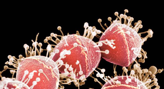 Eletromicrografia mostra fagos atacando bactéria Streptococcus