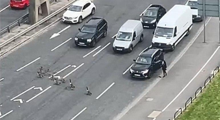 Gansos bloquearam o trânsito em anel viário de Salford, na Inglaterra