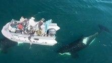 Drone flagra o incrível encontro de mergulhadores russos com orcas