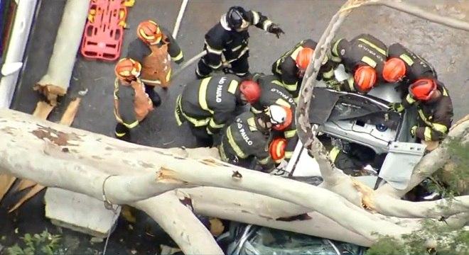 Queda de árvore provocou morte de mulher que estava de carro com a família