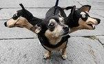 Assim que o cachorro anda, as cabeças balançam e deixam a fantasia ainda mais divertida