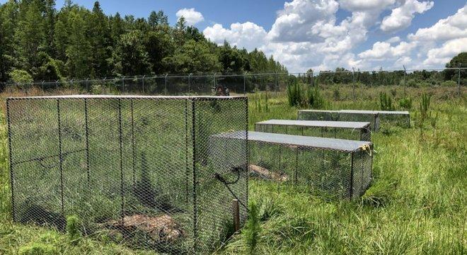 Alguns dos corpos são protegidos por gaiolas para evitar que sejam alvos de aves de rapina Corpos em decomposição