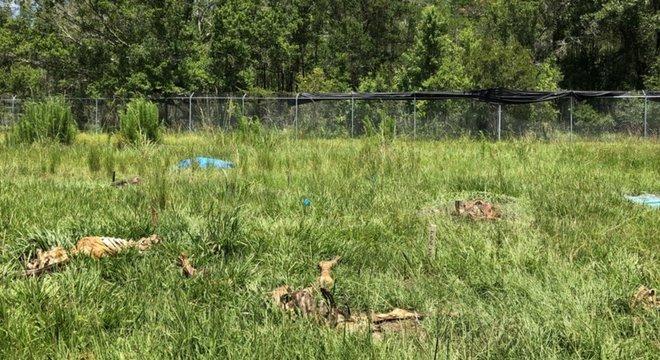 A decomposição dos corpos afeta a terra onde eles se encontram