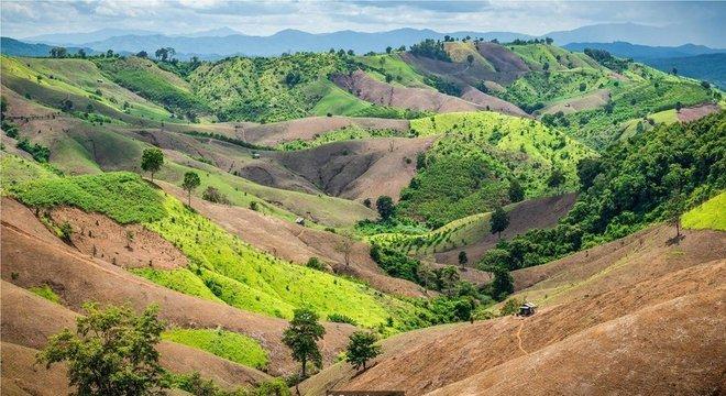 Mesmo as terras que foram desmatadas para servir de pastagens, por exemplo, podem voltar a ter florestas com a ajuda certa