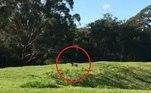 Segundo o tabloide Daily Mail,Alec Mcdonald, 21, meditava na parte de trás de um hospital da região, quando avistou o animal semelhante a uma pantera. Segundo ele, o bicho media entre 1,2 m e 1,4 m de comprimento