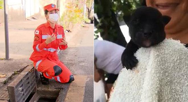 Os dois cães foram resgatados com vida