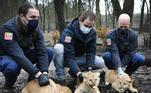 Eles são trigêmeos e nasceram há mais de dois meses no zoológico