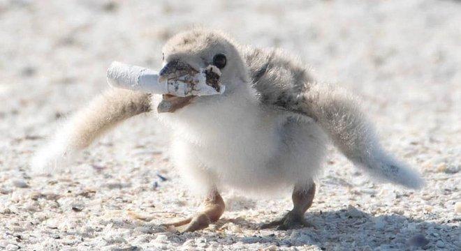 Bitucas de cigarros são os itens de lixo mais encontrados em praias do mundo, segundo entidades de conservação