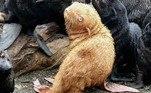 Por isso, caso seja realmente rejeitado pelos companheiros, os biólogos afirmam estar prontos para realocá-loJá outra foca foi encontrada com uma enguia dentro do nariz. Confira a seguir!