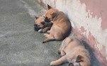 Em breve, recém-chegados vão começar os treinamentos. Desde bem pequenos, os cães do plantel já recebem estímulos dos guardas adestradores para se adaptarem à rotina do grupamento, que começa com brincadeiras até chegar ao aprendizado de comandos de obediência