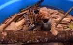 A dupla foi abrigada pelo Grupo de Estudos de Animais Silvestres do Curso de Medicina Veterinária da Universidade de Passo Fundo (RS)