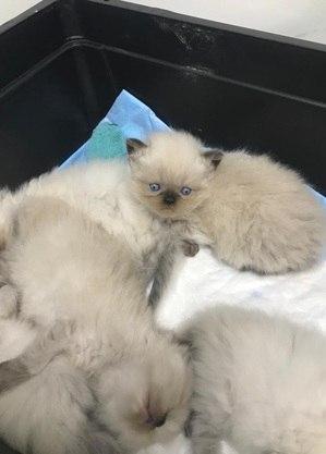 Os filhotes da gata Luna, que recebeu cuidados durante o pré-natal