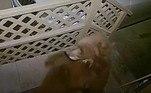 E encontrou dois ursinhos metidos a valentões num empurra-empurra frenético: