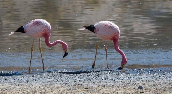 Dizem que os flamingos, que fazem ninho na região, são cada vez menos comuns no salar