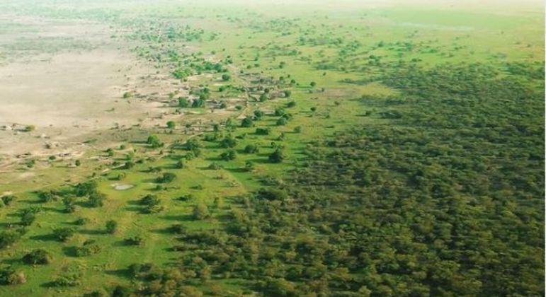 Projeto está ajudando países africanos a manter as florestas do continente