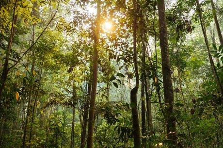 Os ecossistemas tropicais concentram mais de três quartos das espécies do planeta