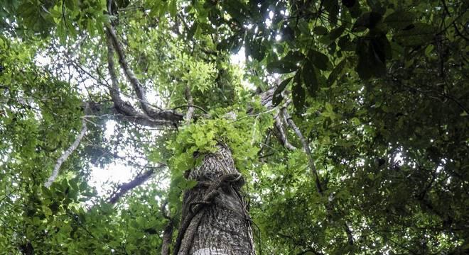 O Brasil, que concentra um terço da área de floresta tropical do mundo, é um dos maiores receptores de recursos do crédito de carbono
