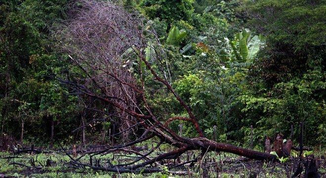 Se a Amazônia perder muitas árvores, ela atingirá um ponto de inflexão, deixará de ser um ecossistema exuberante e se transformará numa savana semiárida