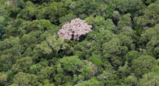 Trecho da floresta amazônica