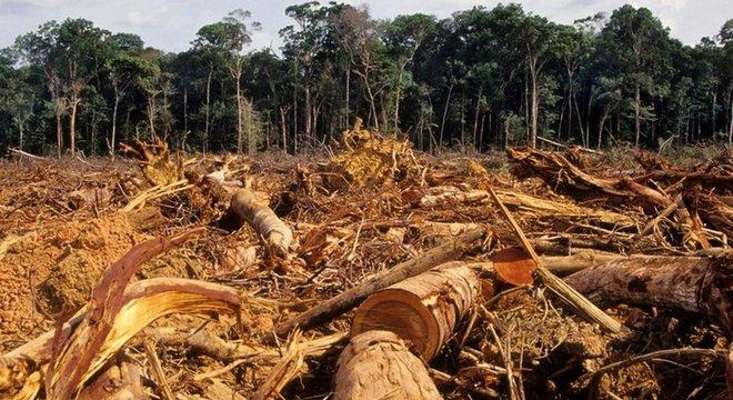Pesquisador diz que agricultores podem ser aliados na proteção da Amazônia