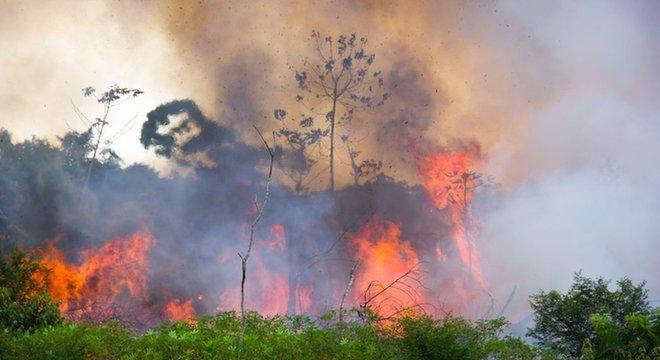 Pesquisador disse que, apesar da pandemia, desmatamento segue em alta na Amazônia