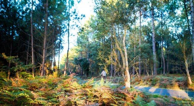 Landes é maior floresta já criada pelo homem na Europa ocidental