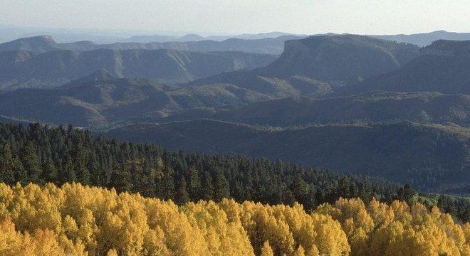 Da próxima vez que você admirar um bosque, imagine há quanto tempo essas árvores estão lá