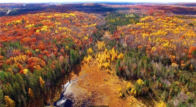 O enorme fungo descoberto por Jim Anderson e seus colegas vive sob uma floresta na península de Michigan há 2.500 anos
