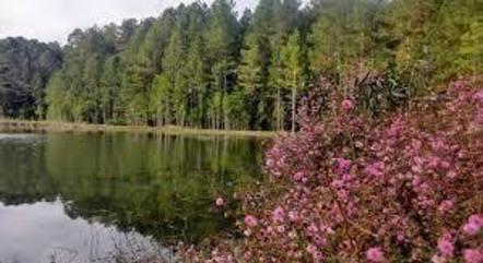 Floresta de Três Barras, perto da privatização
