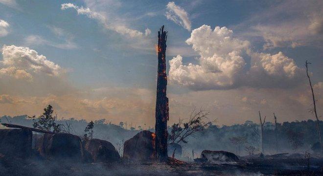 Houve mais de 70 mil incêndios florestais na Amazônia brasileira em 2019
