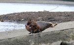 Na terça-feira (23), a polícia local afirmou que estava investigando a morte do animal. Segundo o The Sun, a dona do cachorro foi notificada, mas não responderá por nenhum crimeVEJA ISSO:Escorpiões soltam a cauda quando atacados, mas morrem constipados