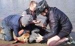 Transeuntes que estavam na orla do Tâmisa, onde a foca fixou residência, tentaram ajudá-la enquanto o cachorro cravava os dentes nela. No grupo estavaRebecca Sabben-Clare, 49 anos, dona do cachorro que andava sem coleira