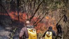 Com fogo controlado, começa resgate de animais no Juquery (SP)