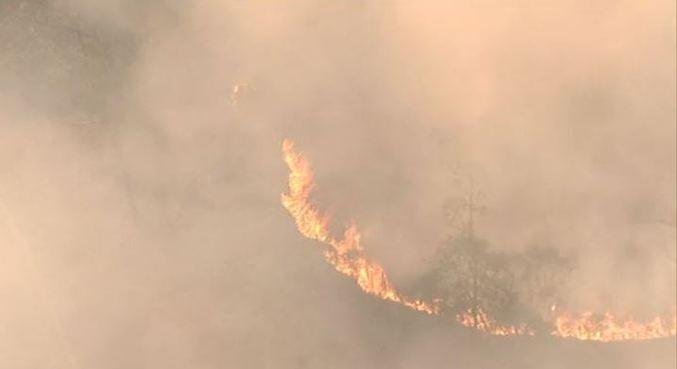 Segundo Corpo de Bombeiros, fogo consumiu 40% do Parque do Juquery (SP)