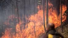 Grande SP tem mais de 100 focos de incêndio em mata em 3 dias