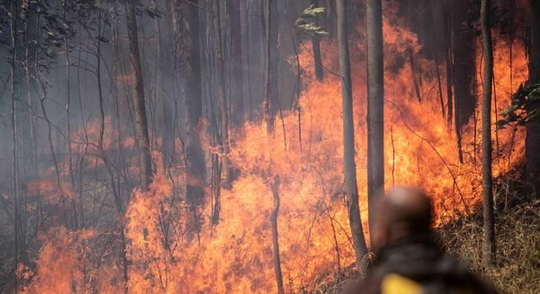 Fogo atinge Parque do Juquery, na Grande SP, desde domingo (22)