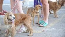 Fiocruz identifica cão e gato com anticorpos contra o coronavírus