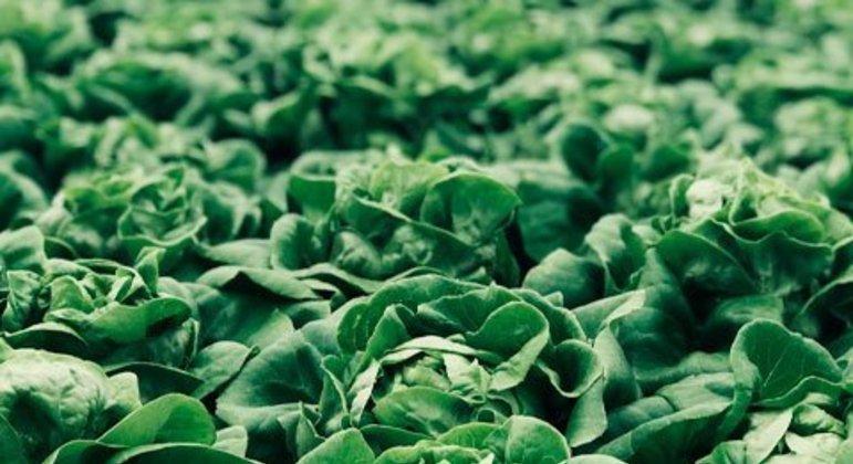 Folhas verdes