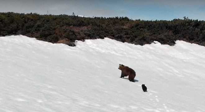 Fora de perigo, mãe e filhote continuam sua jornada